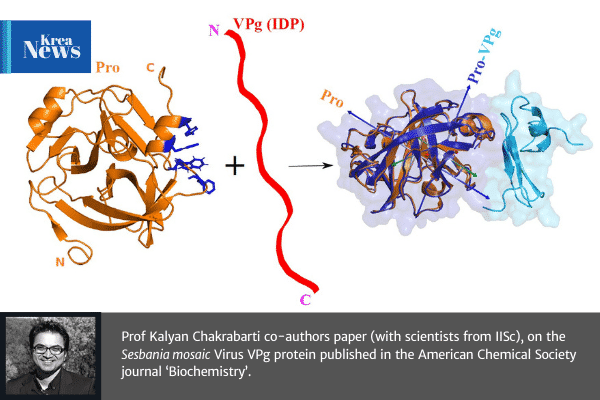 "Prof Kalyan Chakrabarti co-authors paper on ""Aromatic Interactions Drive the Coupled Folding and Binding of the Intrinsically Disordered Sesbania mosaic Virus VPg Protein"""